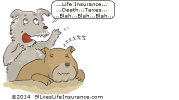 9 Lives Life Insurance for Smart People